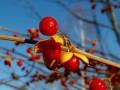 綺麗な木の実
